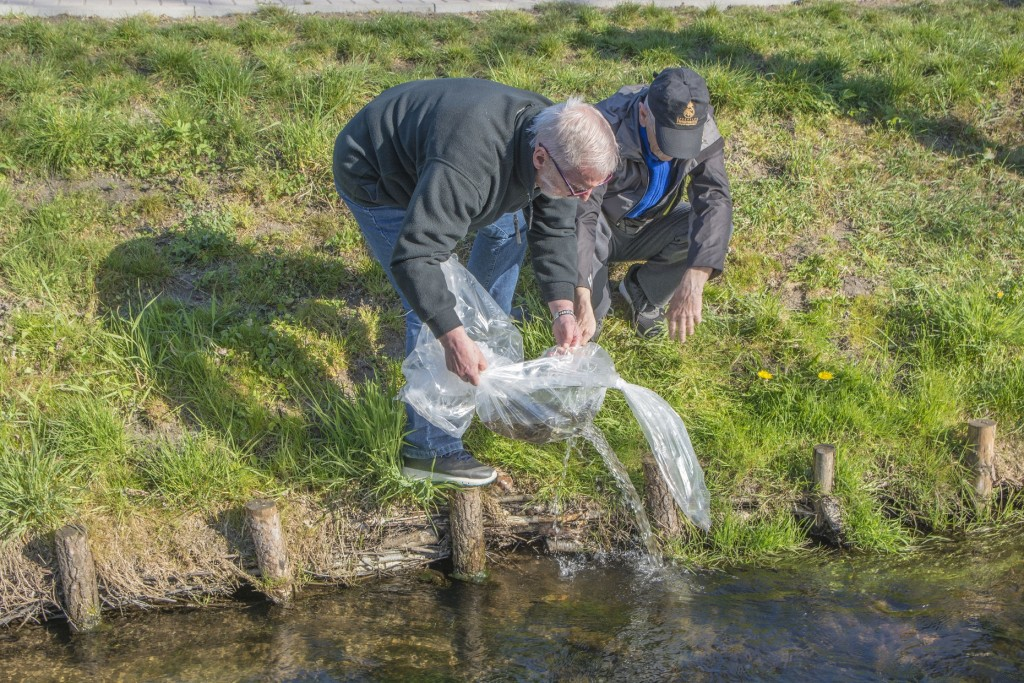 Ponad 14 tysięcy pstrągów potokowych wpłynęło do Zagórskiej Strugi
