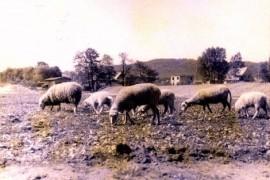 Zdjęcie terenu hali MOSiR w latach 70.