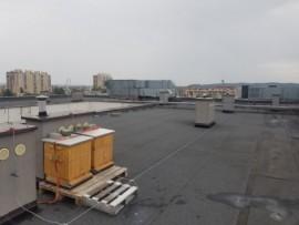 Miejskie pasieki zlokalizowane na hotelowym dachu.