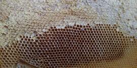 Plaster miodu wytworzony przez rumskie pszczoły.