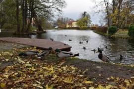 Kaczki w parku Starowiejskim