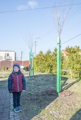 Tymon stojący obok zasadzonych drzew