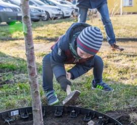Tymon pomagający w sadzeniu drzew