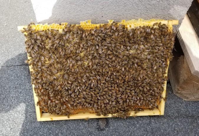 Pszczoły zadomowiły się na hotelowym dachu