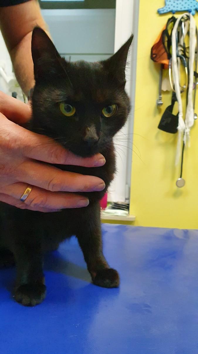 Znaleziono czarną młodą kotkę
