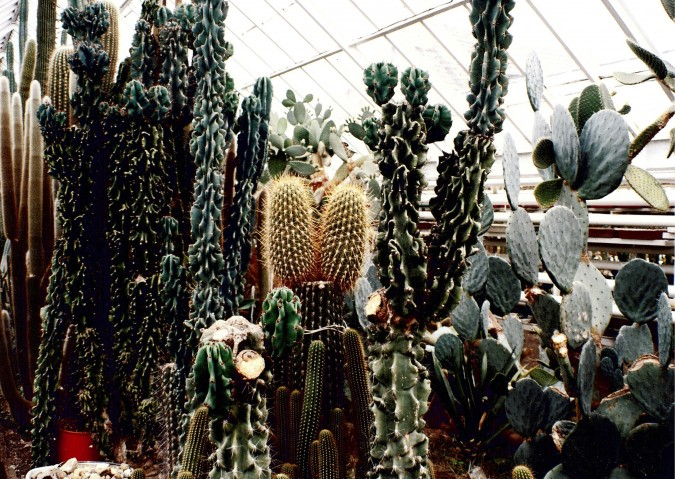 Kaktusiarnia państwa Hinzów