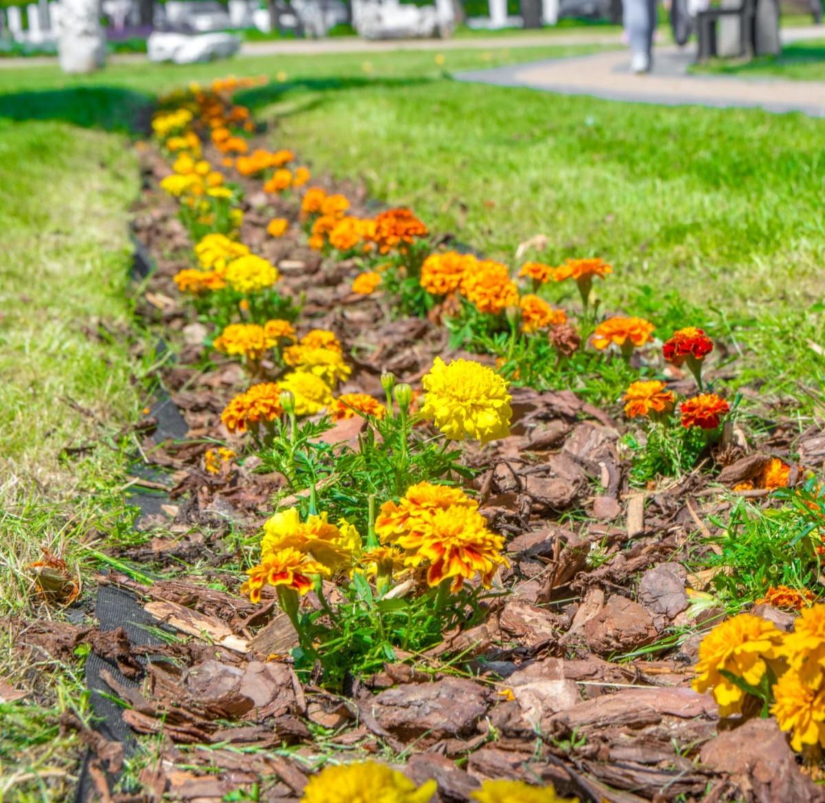 Wiosenne porządki nie ominą miejskiej zieleni