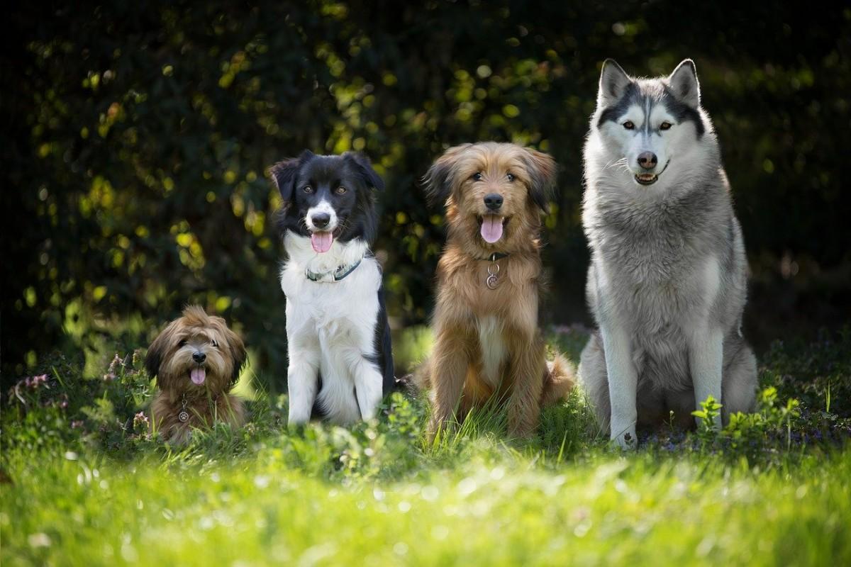 """Ponownie rusza program """"Sterylizacja i kastracja zwierząt właścicielskich"""""""